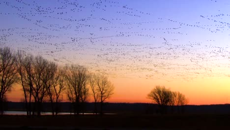 Thousands-Of-Birds-Migrate-Across-A-Wetland-Marsh-Region-In-North-America-1