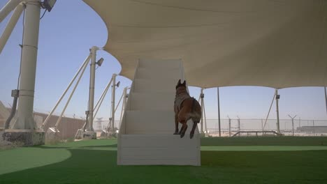Military-Working-Dogs-And-their-Handlers-Work-Out-And-Conduct-Training-Exercises-At-the-Al-Udeid-Air-Base-Qatar