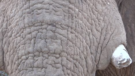 Extreme-close-up-of-a-large-African-elephant-skin-face-and-eyes