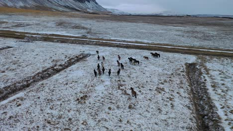 An-aerial-view-shows-a-herd-of-horses-trotting-along-farmland-in-Iceland