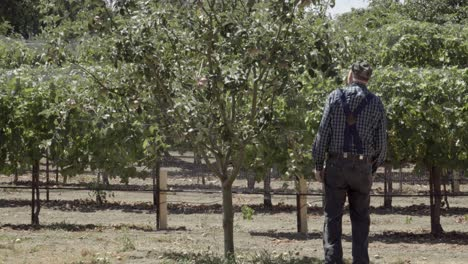 An-elderly-farmer-inspects-apples-and-wine-grapes-on-a-ranch-in-the-rich-agricultural-land-of-the-Lompoc-Valley-California