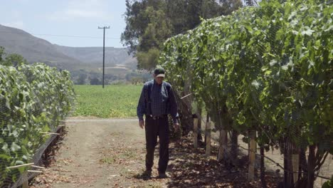 An-elderly-farmer-inspects-apples-and-wine-grapes-on-a-ranch-in-the-rich-agricultural-land-of-the-Lompoc-Valley-California-1