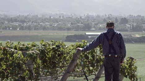 An-elderly-farmer-inspects-apples-and-wine-grapes-on-a-ranch-in-the-rich-agricultural-land-of-the-Lompoc-Valley-California-2