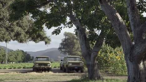 Two-old-international-scout-vehicles-parked-on-a-ranch-in-the-Lompoc-Valley-California