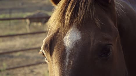 Beautiful-afternoon-light-for-a-closeup-of-a-horse-sustainable-permaculture-farm-and-ranch-in-Summerland-California