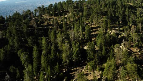 Beautiful-aerial-over-the-Pine-Mountain-wilderness-and-trees-slated-to-be-logged-and-habitat-removed-1