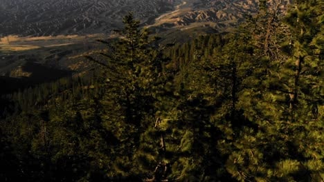 Beautiful-aerial-over-the-Pine-Mountain-wilderness-and-trees-slated-to-be-logged-and-habitat-removed-6