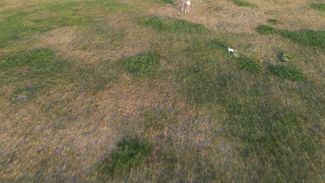 Aerial-View-City-Park-Garden-1