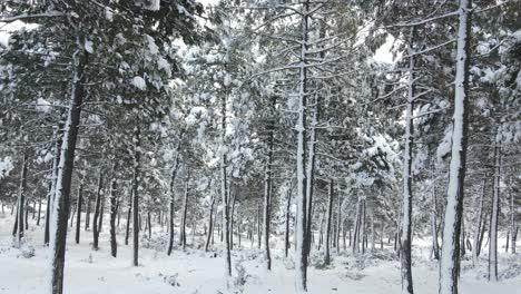 Frozen-Forest-White-Winter-Snow