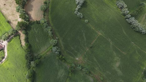Aerial-Drone-View-Rural-Plant-Field