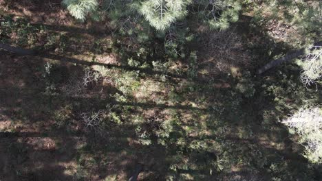Aerial-Environment-Forest-Trees