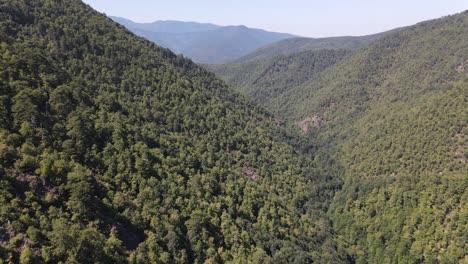 Umwelt-Natürlicher-Grüner-Wald