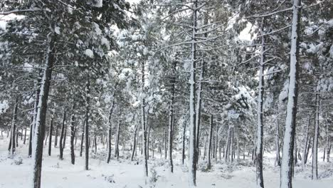 Frozen-Trees-Covered-Snowing