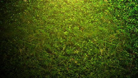 Cinematic-background-with-green-grass-and-light-effect-on-summer-background-with-motion-camera