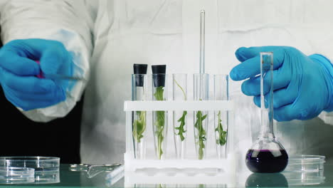 Scientist-works-with-plant-samples-in-lab
