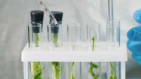 Macro-shot-of-test-tubes-with-plants-1