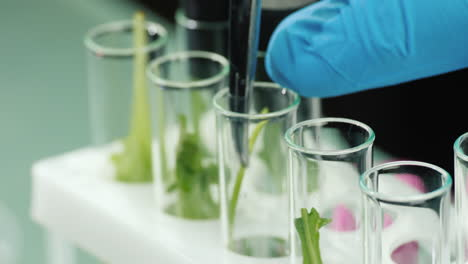 A-man-in-gloves-works-in-a-laboratory-with-plant-samples-1