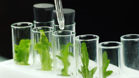 A-man-in-gloves-works-in-a-laboratory-with-plant-samples-2
