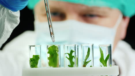 Scientist-conducts-research-with-plants-in-lab