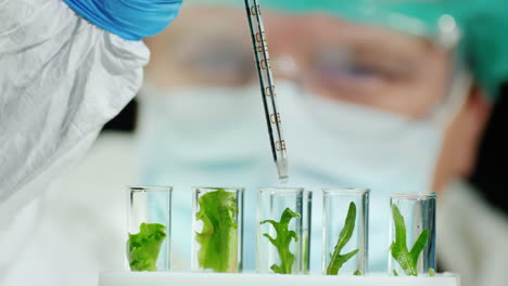 Scientist-conducts-research-with-plants-in-lab-1
