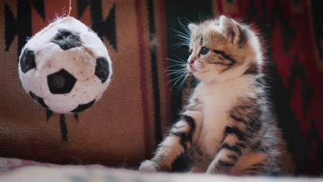 Cute-Kitten-Looks-Surprised-At-The-Toy-Soccer-Ball