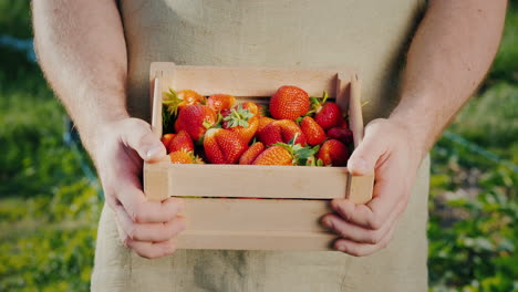 Men-s-Hands-With-A-Wooden-Box-Of-Ripe-Strawberries