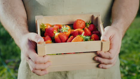 Men-s-Hands-With-A-Wooden-Box-Of-Ripe-Strawberries-1