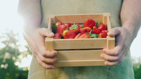 Farmer-Holds-Wooden-Box-With-Strawberries