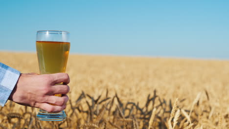 Men-s-hand-holds-a-glass-of-light-beer-in-a-wheat-field-on-a-summer-day-1