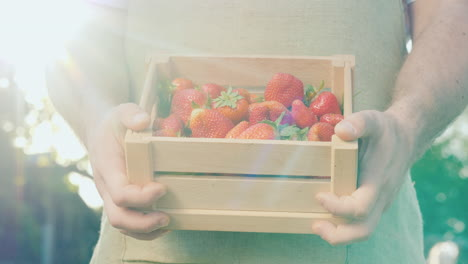 A-Man-Holds-A-Box-Of-Mouthwatering-Strawberries-In-The-Sun
