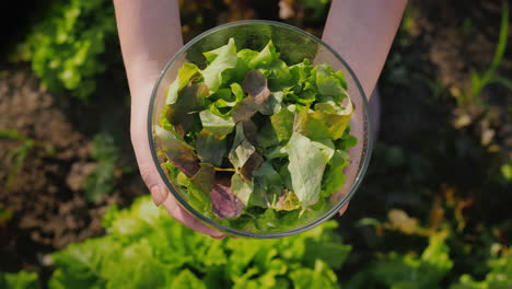 A-Woman-Holds-A-Bowl-Of-Lettuce-Over-The-Vegetable-Garden-Where-It-Grows