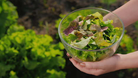 Side-View-Of-A-Woman-Holding-A-Bowl-Of-Lettuce-Over-The-Vegetable-Garden-Where-It-Grows