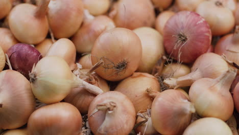 The-harvest-of-onions-lies-on-the-ground-1
