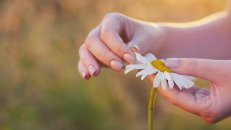 Women-s-hands-gently-stroke-flower-petals-1