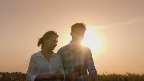 The-Silhouettes-Of-The-Two-Farmers-Walk-Along-The-Wheat-Field-Which-Is-Swayed-By-A-Strong-Wind