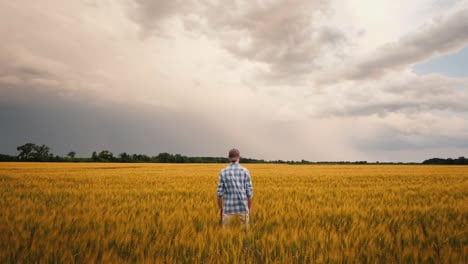 Farmer-In-A-Field-Of-Wheat-Against-The-Background-Of-A-Stormy-Sky-1