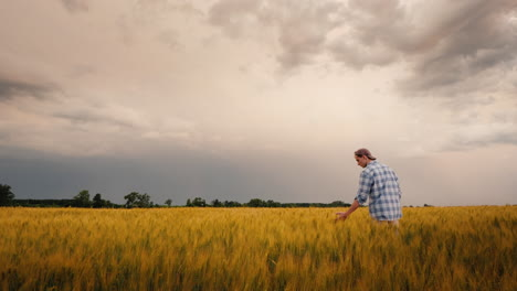 The-Figure-Of-The-Farmer-In-The-Field-Of-Wheat-Touches-The-Ears-With-His-Hand