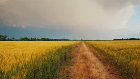 Road-To-The-Field-Of-Wheat-Against-The-Background-Of-A-Dramatic-Storm-Sky-1