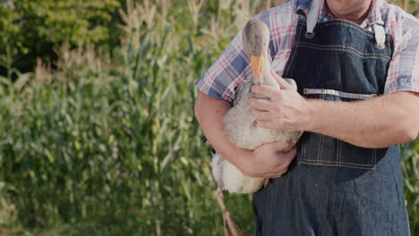 Man-holds-a-large-goose