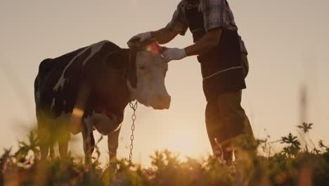 Farmer-strokes-his-cow-in-a-meadow