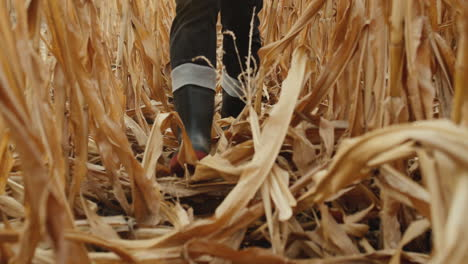 Legs-in-boots-walk-through-rows-of-rows-of-corn