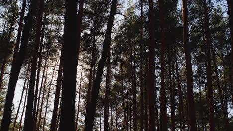 Riding-along-in-a-pine-forest-as-the-sun-shines-through-the-trees