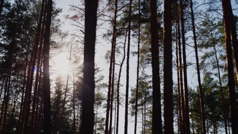 Riding-along-in-a-pine-forest-as-the-sun-shines-through-the-trees-1