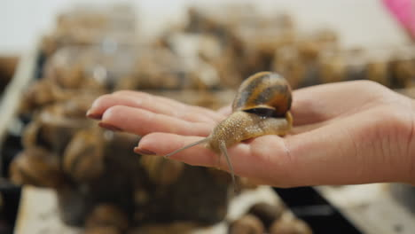 A-woman-holds-a-garden-snail-in-the-palm-of-her-hand