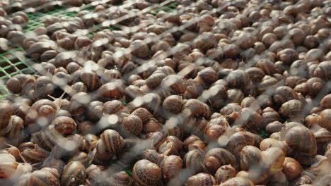 A-snail-farm