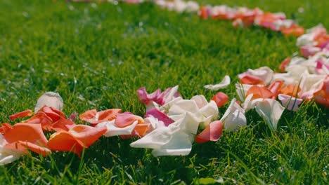 Rose-petals-lie-on-green-grass