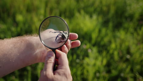 Researcher-looks-at-large-deer-beetle-through-a-magnifying-glass-2