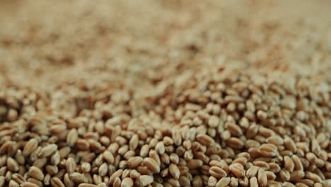 Surface-of-wheat-grains