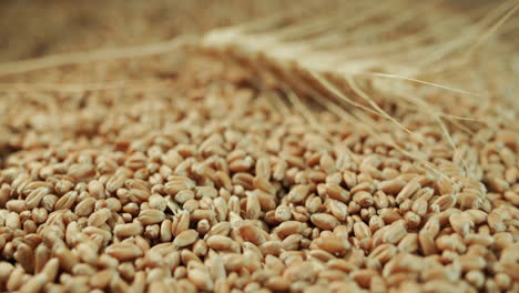 The-grains-of-wheat