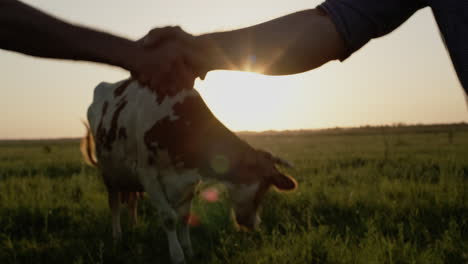 Two-farmers-shake-hands-in-a-close-up